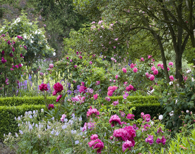 Rose-Garden-Sissinghurst-C